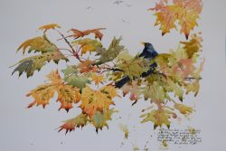 Autumn Blackbird